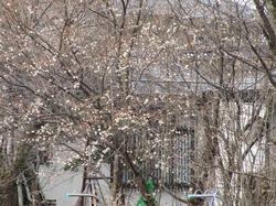 2010-03-28-10-22-37_1200.jpg